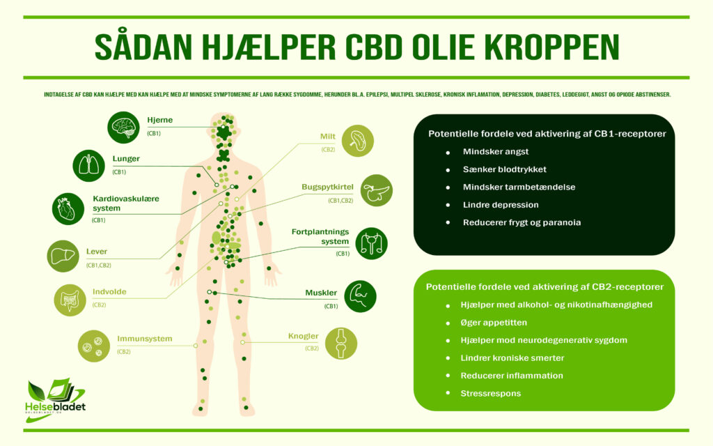 CBD Olie - Sådan hjælper CBD Olie kroppen (Infografik)