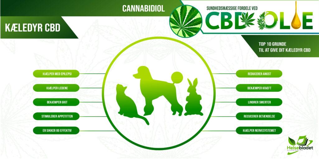 INFOGRAFIK: CBD olie til kæledyr så som hund og kat