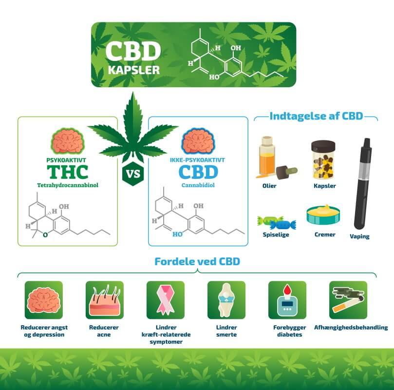 CBD Kapsler infografik
